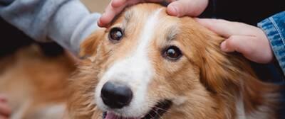 Adopt-a-Pet_Casestudy